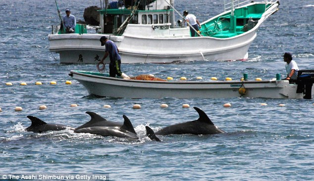 killing of dolphins Get breaking news alerts and special reports the news and stories that matter, delivered weekday mornings fishermen in the small japanese town of taiji have begun their annual dolphin drive, capturing and killing.