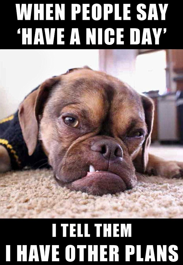 When Is National Dog Day Uk